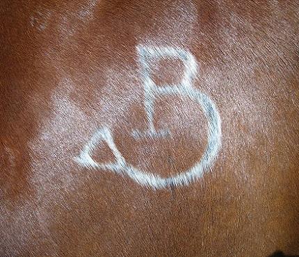 Equine-Freeze-Brand